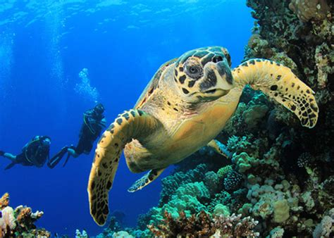 incredible scuba diving locations nerve rush