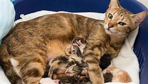 Mamma gatta da record: 11 micetti!