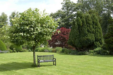 alberi per giardino alberi ornamentali alberi alberi per ornamento