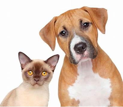 Vet Cat Dog Jarman Veterinary Client Animals