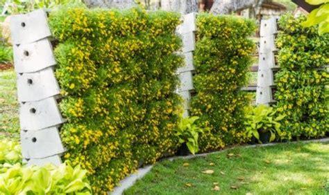 tanaman merambat  pagar gardeningid