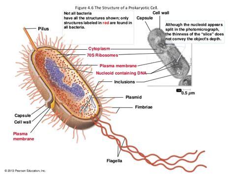 Microbial World Prokaryotic Cell Anatomy
