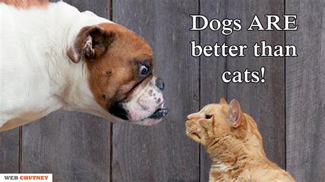 why are dogs better than cats 28 best why are dogs better than cats why cats are better than dogs 6 reasons why dogs are