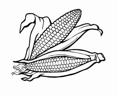 Coloring Thanksgiving Pages Corn Clipart Healthy Foods