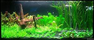 Co2 Rechner Aquarium : silmarillion flowgrow aquascape aquarium database ~ Orissabook.com Haus und Dekorationen