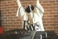 Tampa Bay Rays Dj GIF - Find & Share on GIPHY