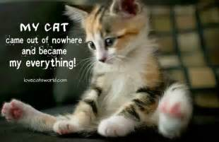 cat sayings cat and quotes quotesgram