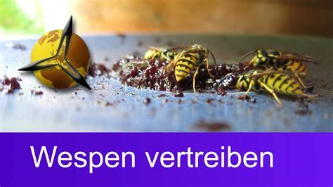 Nelkenöl Gegen Wespen wespenplage wespen vertreiben was hilft gegen wespen