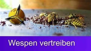 Kupfer Gegen Wespen : wespenplage wespen vertreiben was hilft gegen wespen ~ Watch28wear.com Haus und Dekorationen