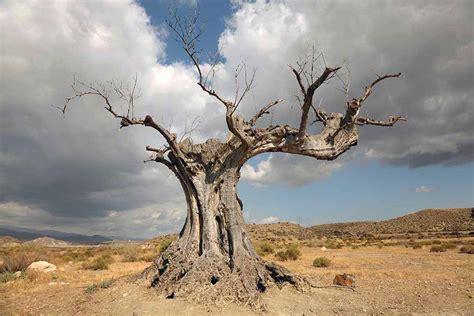 killing  tree softly pitara kids network