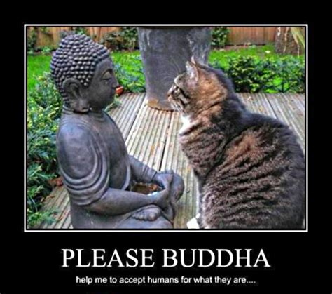 Buddha Memes - 301 moved permanently
