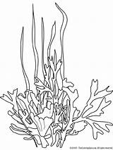 Seaweed Coloring Pages Drawing Ocean Drawings Sea Plants Line Coral Printable Underwater Colouring Plant Cartoon Google Stencils Draw Printables Template sketch template