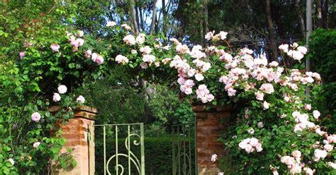 tipos de rosas enterate de todos los  hay