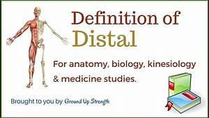 Distal Definition  Anatomy  Kinesiology  Medicine