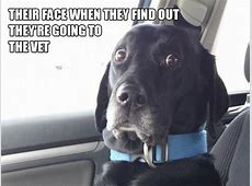 Hilarious Struggles Dog Owners Will Understand