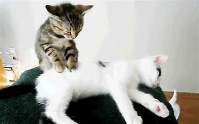 Cat Massage Animals Gifs Cats Kitty Animated