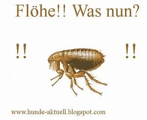 Flohbisse Beim Menschen : der hundeblog aktuelles rund um den hund wissenswertes ~ Watch28wear.com Haus und Dekorationen