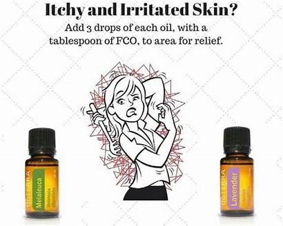 Skin Oil Coconut Itchy Dogs Essential