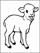 Sheep Coloring Printable sketch template