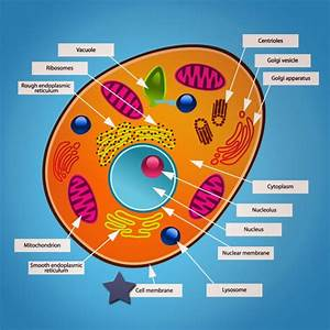 Animal Cell Structure For Kids