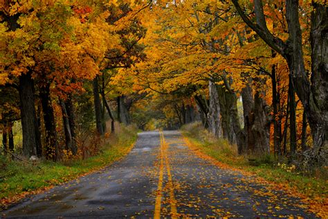 fall photos narrow autumn road 6016 x 4016 forest other photography miriadna com