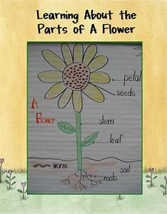 44 Best Images About F Preschool Activities On Pinterest