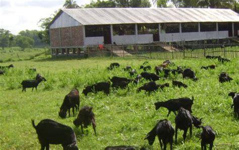 Turkey farming business plan