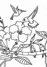 Hummingbird Coloring Pages Gathering Season Bird Hummingbirds Flower Animals sketch template