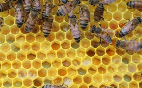 drama in the hive adventures of a beekeeper