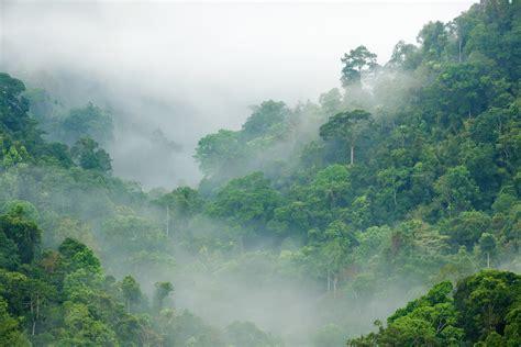 tropical forest finance facility center  global development