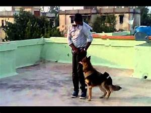 Dog Training, Maharashtra,INDIA - YouTube