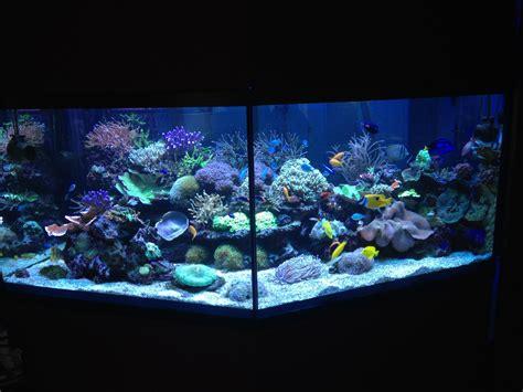 demarrage d un aquarium d eau de mer