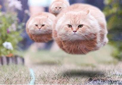 Kitty Hover Awesomegifs