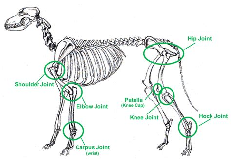 natural remedies  dog joint problems bullyade