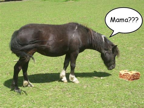 pferdefleisch  beduerftige seite  allmystery
