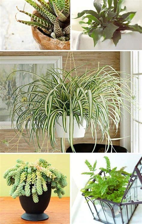 Pflanzen Wenig Licht by Welche Zimmerpflanzen Brauchen Wenig Licht