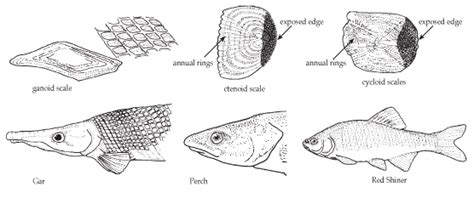 tpwd kids fish scales