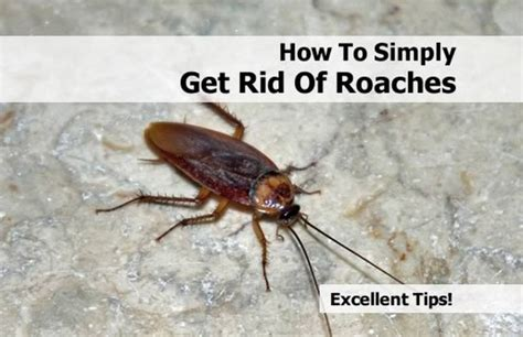 how to get rid of cockroaches in kitchen cabinets how to get rid of cockroaches effective methods that