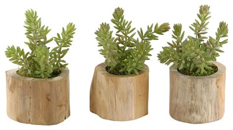 rustic plants d w silks d w silks flocked burro tails in natural wooden planter set of 3 view in your