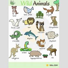 Animal Names Types Of Animals With List & Pictures  7 E S L