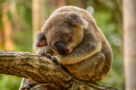sleeping animals wallpapers high quality