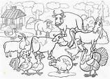 Zoo Divyajanani Trueinfo Collegesportsmatchups sketch template