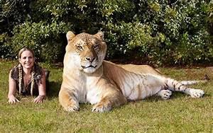 Rússia - Não é um leão nem um tigre: Czar é um ligre