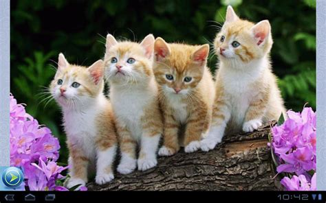 kittens pictures  android apps  google play