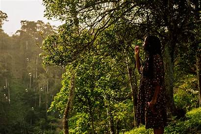 Forest Tanga Tanzania Night Tz Estate Hotels
