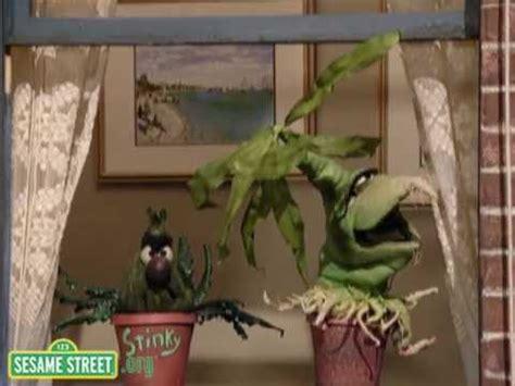 sesame street desperate houseplants youtube