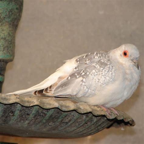 perched white dove bird by fantasystock on deviantart