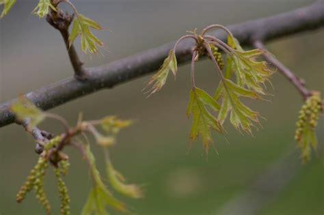 branche de bois flotté image libre bois dur ch 234 ne arbre branche
