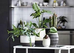 Pflanzen Die Kaum Licht Brauchen : sukkulenten pflegen vermehren arten sch ner wohnen ~ Markanthonyermac.com Haus und Dekorationen