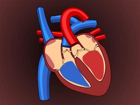 heart lesson plans  lesson ideas brainpop educators